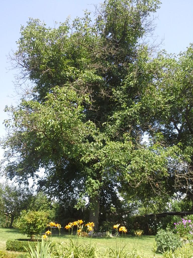 prorezavani-stromu