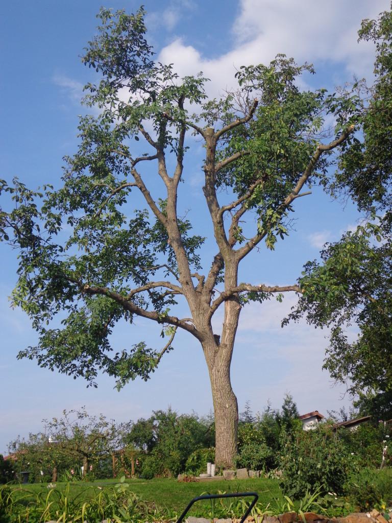 prorezavani-stromu2